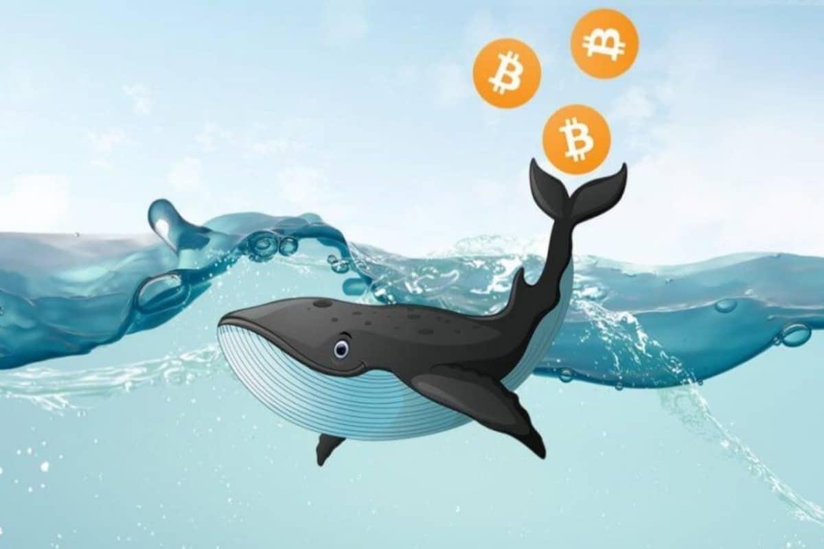 نهنگ بیت کوین و تاثیرات آن در بازار رمزارزها